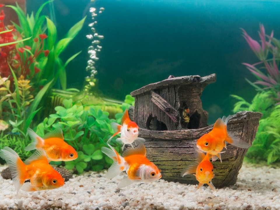 Vissenvoer kopen in Friesland