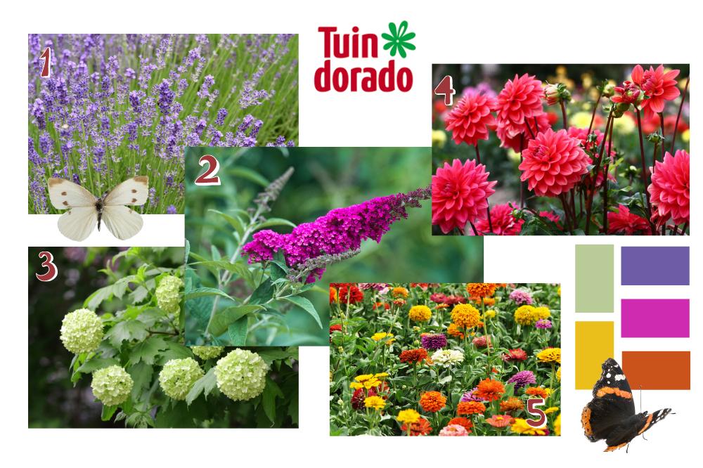 Vlindervriendelijke tuin - Tuindorado