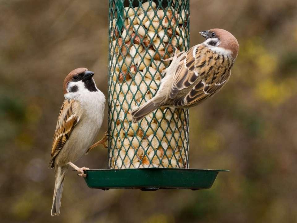Vogelvoer Friesland