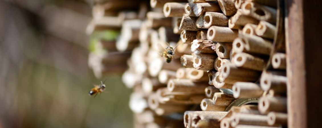Biodiversiteit-producten-kopen-tuindorado