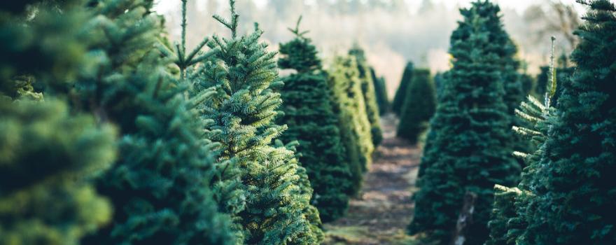 kerstbomen-kunstkerstbomen-leeuwarden-kopen